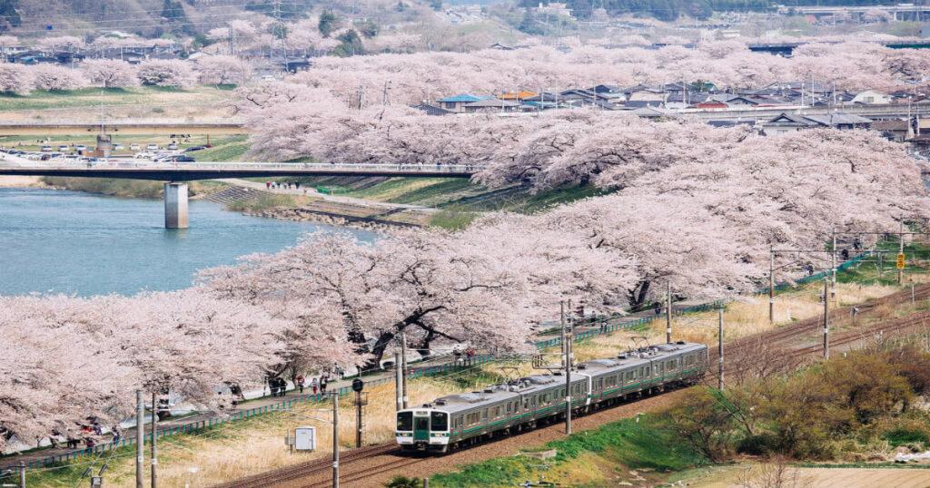 日本東北賞櫻最強推薦 櫻花控們趕緊筆記!