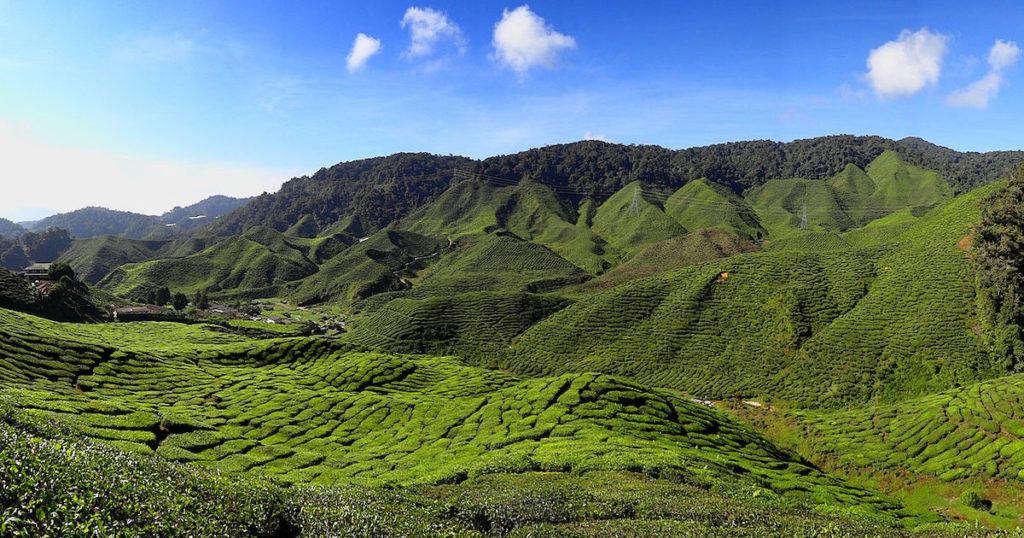 馬來西亞金馬崙高原・舒爽的英倫風情避暑勝地