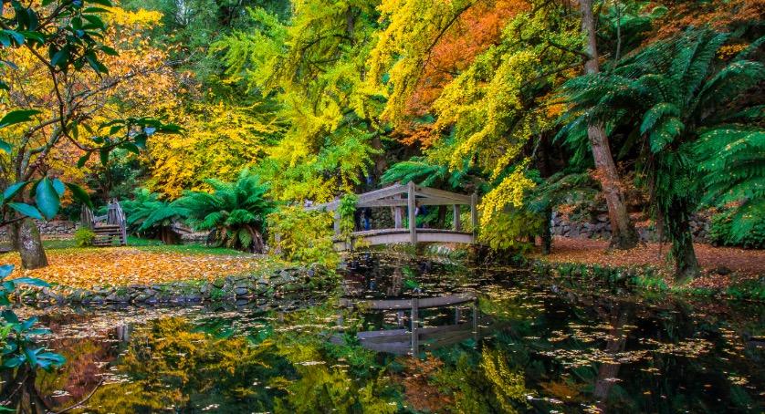南半球的浪漫秋之旅~澳洲雪梨、墨爾本五大賞楓景點