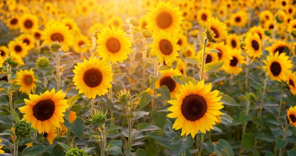 日本夏季魅力絕景Top5!令人身心舒暢100%療癒的美景