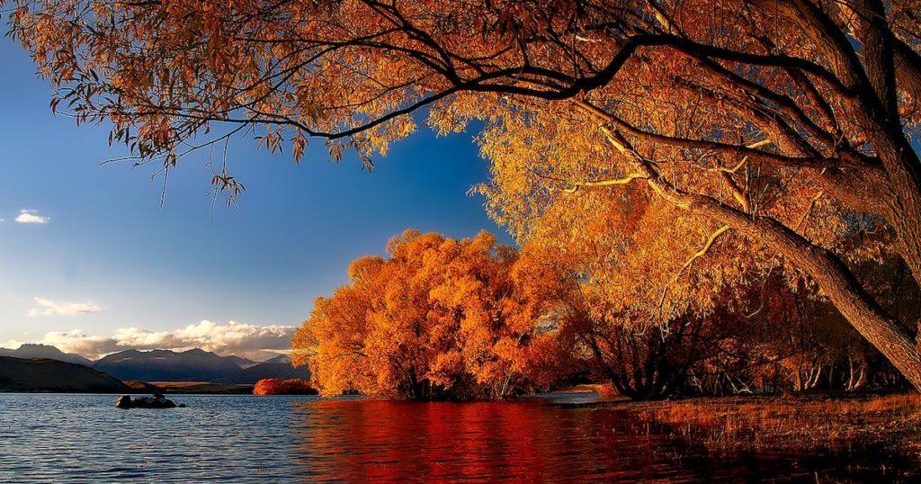 現在去紐西蘭正是時候!令人驚豔的楓紅美景