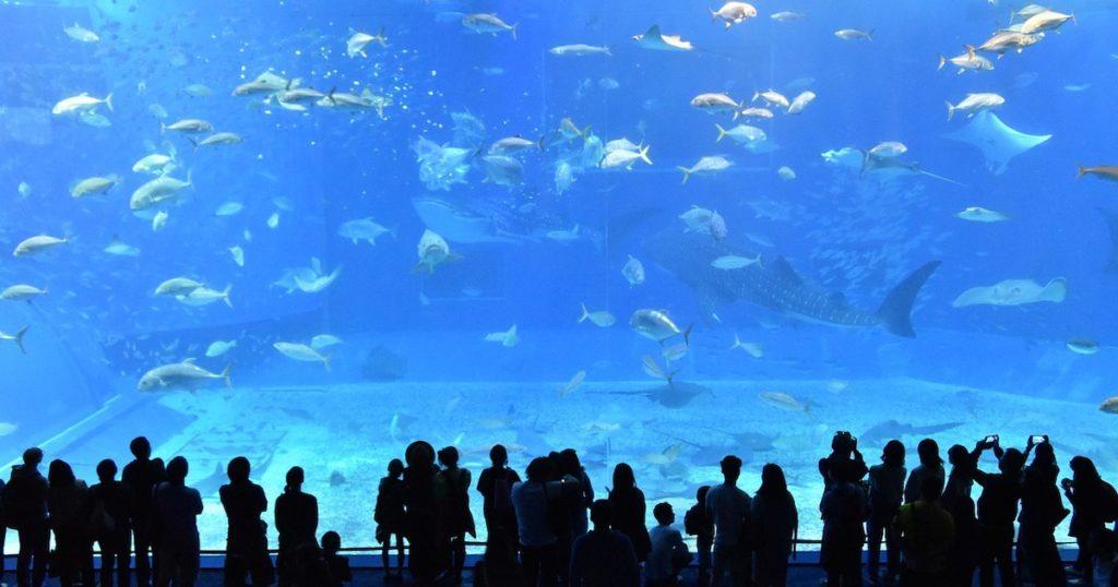 水族館迷看過來!精選9間日本水族館,與海洋動物約會吧!