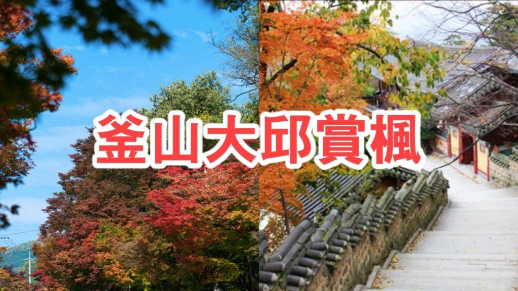 賞楓不只有日本!韓國釜山大邱也很美