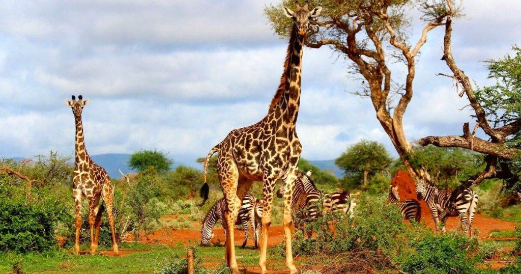 【Triplisher玩樂報】旅遊同時兼顧環境與自然保育・生態旅遊景點報你知!