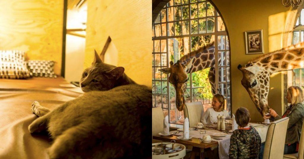 【Triplisher玩樂報】今晚想睡貓咖啡店或動物園?貓咪獅子長頸鹿伴你入夢