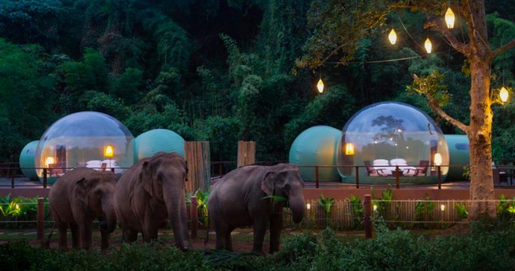 【Triplisher玩樂報】泰國泡泡屋!白天欣賞山林美景和大象,晚上看星星!