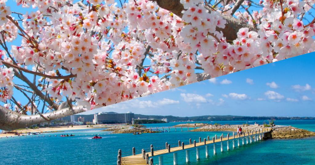 賞櫻季第一波在沖繩|重點五大沖繩櫻花祭攻略