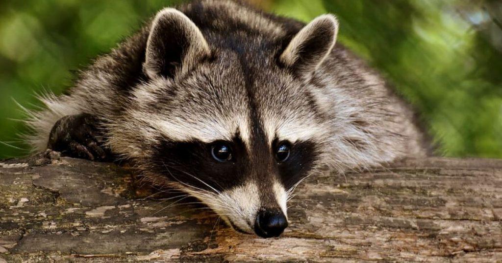 線上動物園開張 一起看動物直播療癒身心!