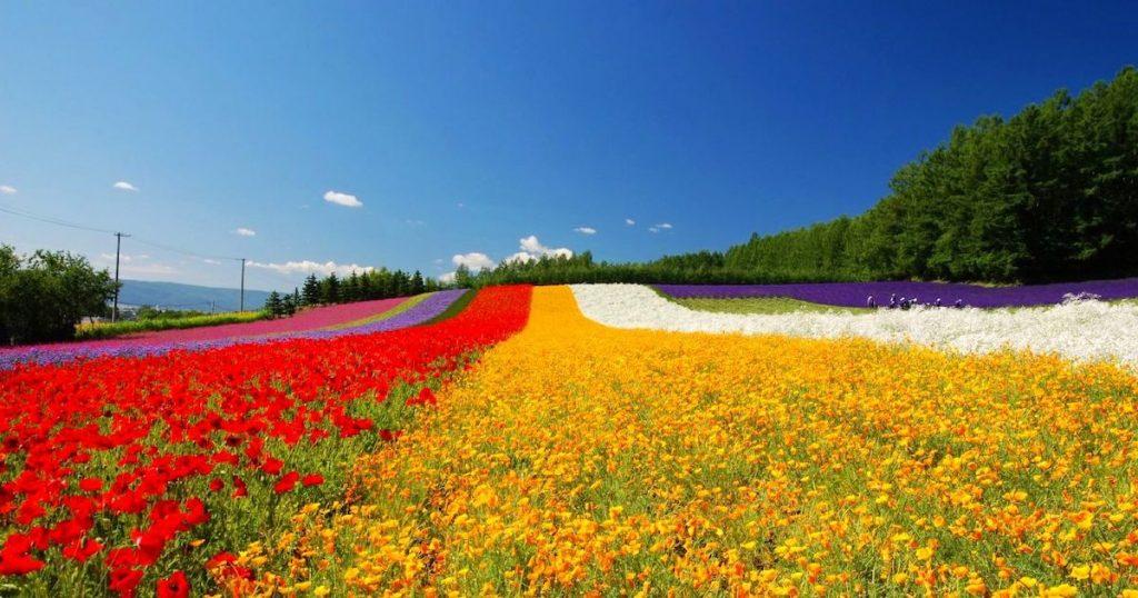 這個地方不能只去一次而已| 感受北海道的四季之美