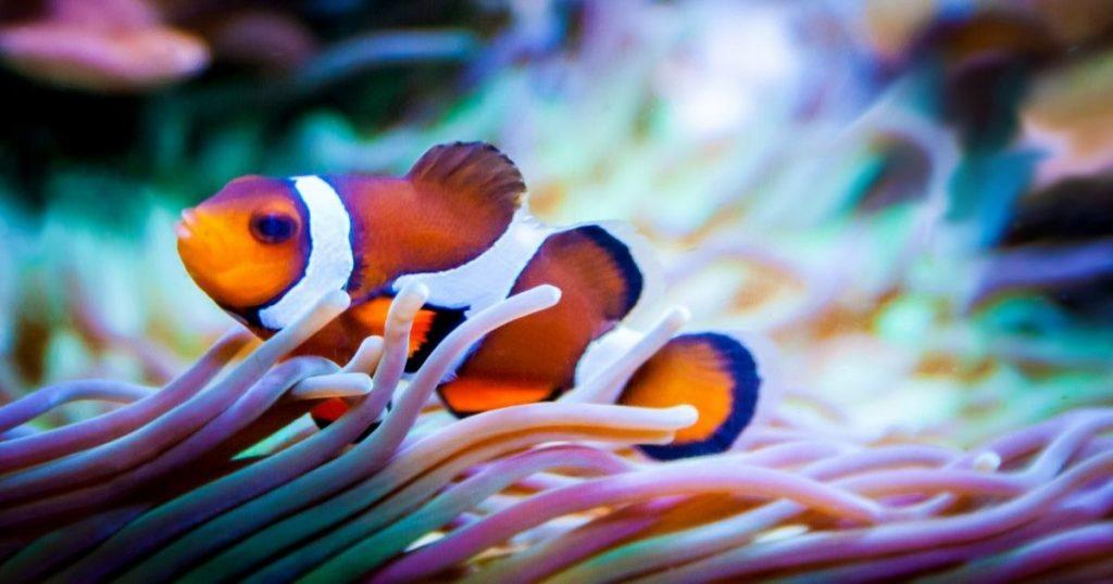 色彩斑斕的海底世界|盤點世界八個珊瑚礁美景
