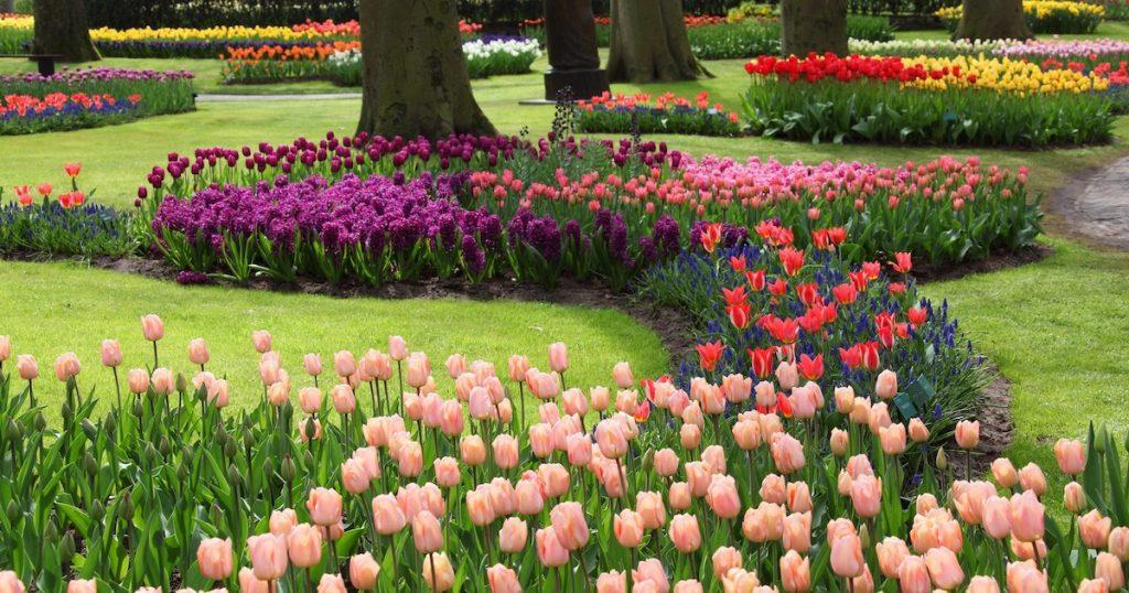 期間限定!在家也能欣賞美麗盛開的荷蘭鬱金香